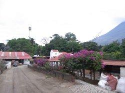 画像2: グアテマラ『サンタ・カタリーナ農園 』パカマラ種 ハイロースト 100g