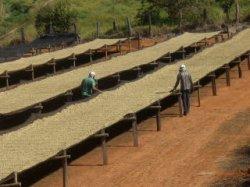 画像2: ブラジル『マカウバデシーマ農園』ボイア・ナチュラル フレンチロースト 100g