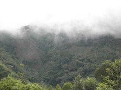 画像3: ペルー 『フェスパ農園』ティピカ種 ハイロースト 100g