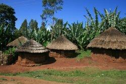画像2:  エチオピア・ナチュラル『ゴティティステーション』 シティロースト 100g
